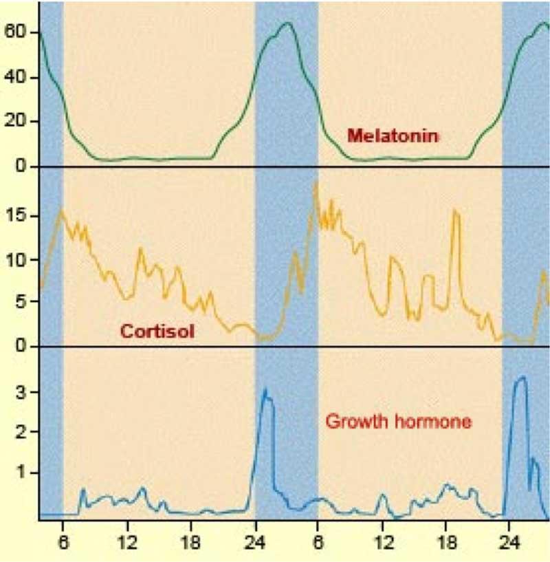 sleepandhormones1